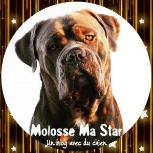 Molosse Ma Star